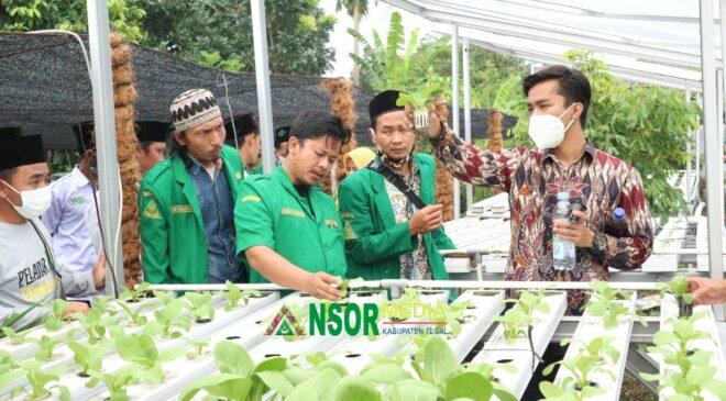 Diluncurkan, Ansor Tani Muda Lebaksiu Bekali Kader Pelatihan Hidroponik, GP Ansor